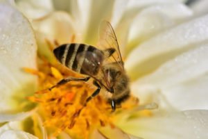 Symbolisme des abeilles
