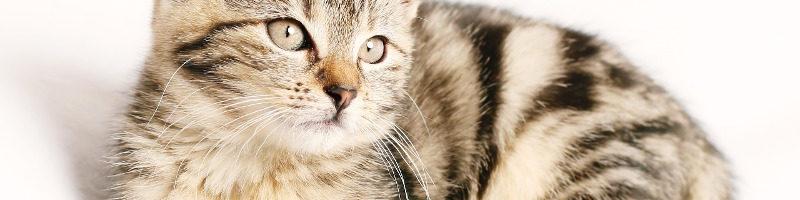 symbolisme du chat